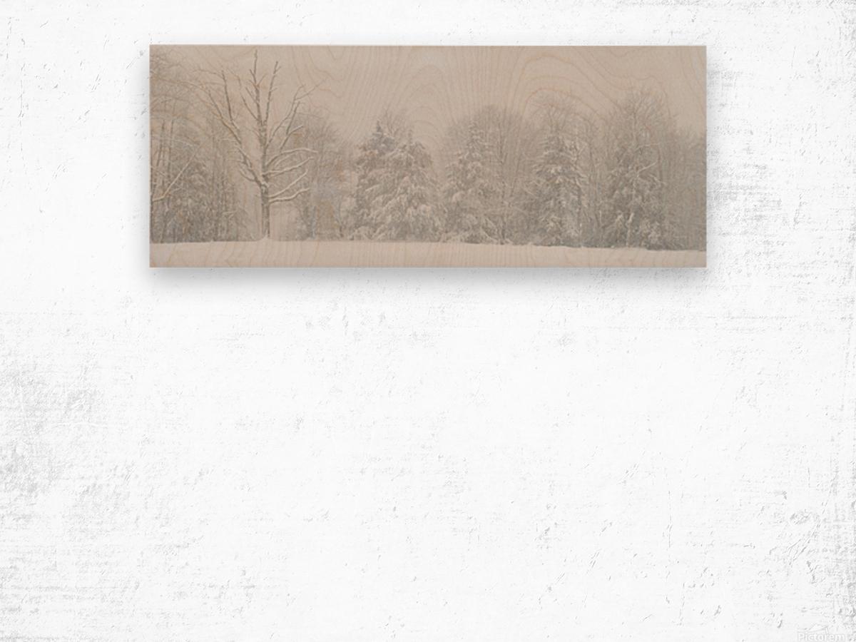 Treeline apmi 1571 Wood print