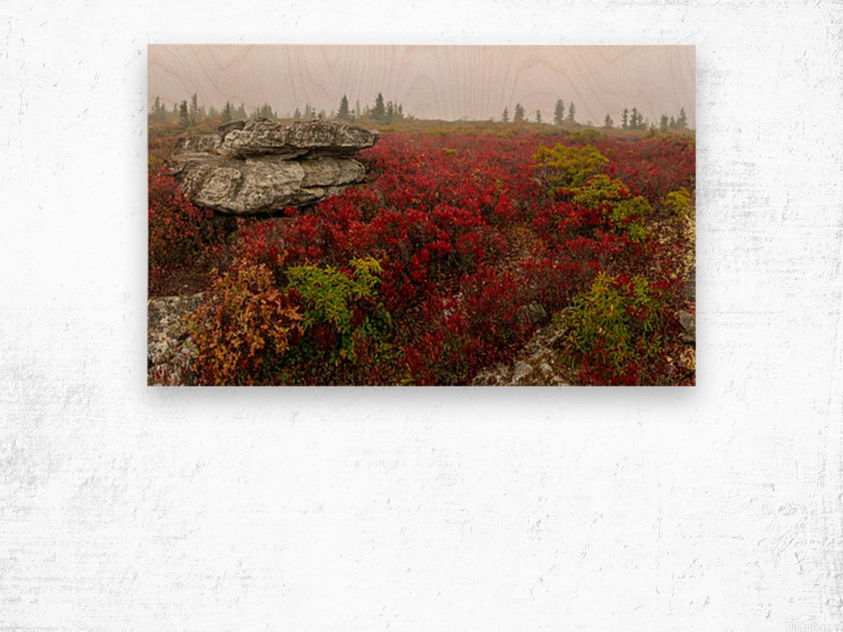Alpine Tundra apmi 1812 Wood print