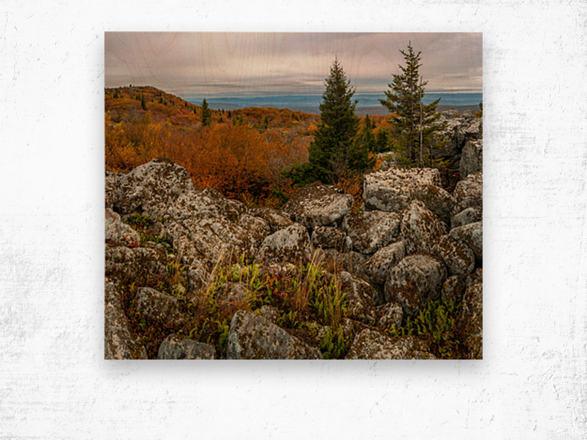 Bear Rocks Overlook apmi 1789 Wood print