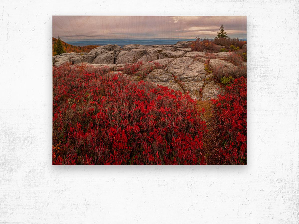 Bear Rocks Preserve apmi 1792 Impression sur bois