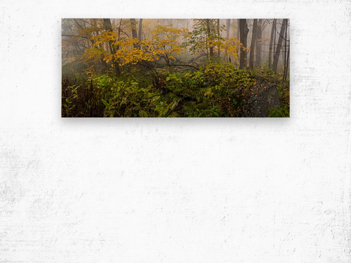 Fall Color apmi 1865 Wood print