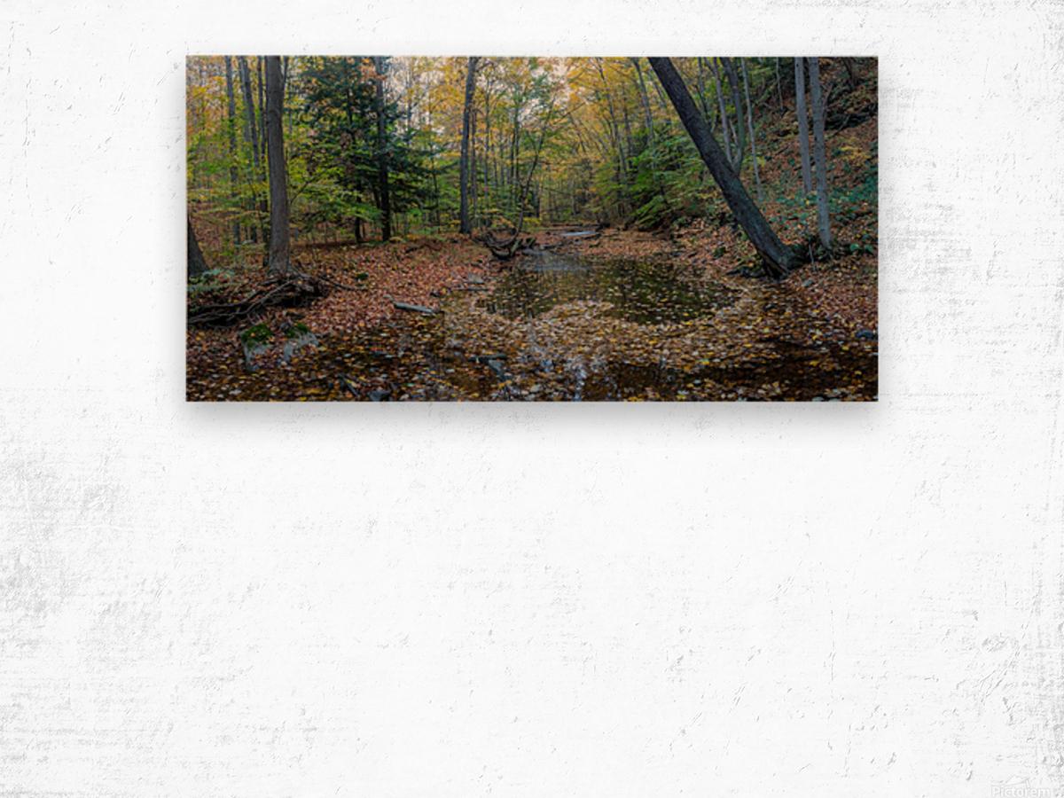 Roaring Run apmi 1908 Wood print
