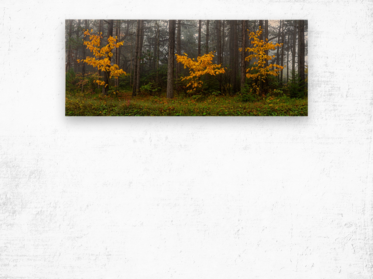 Touch of Color apmi 1849 Wood print
