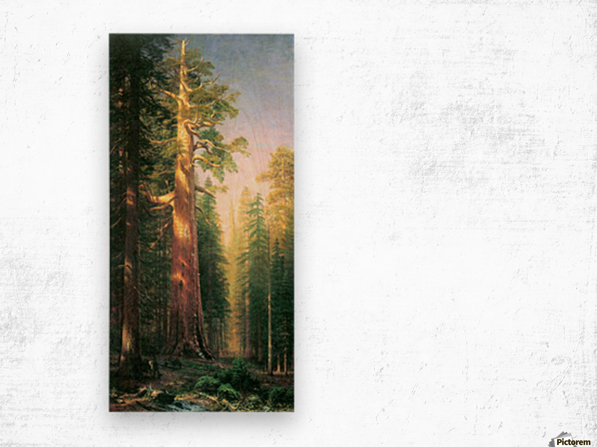 The big trees, Mariposa Grove, California by Bierstadt Wood print