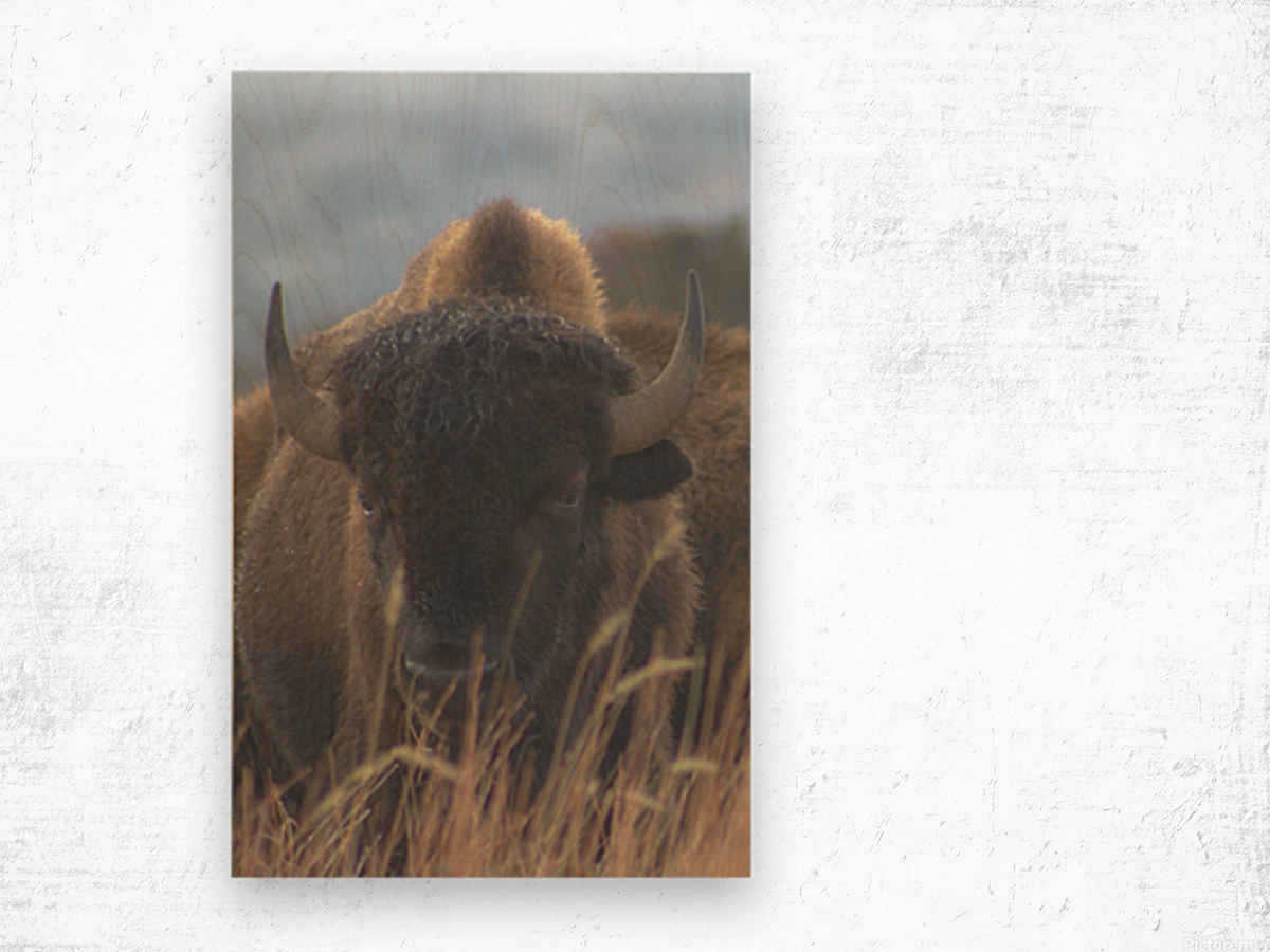 Wet Hair Dont Care Wood print