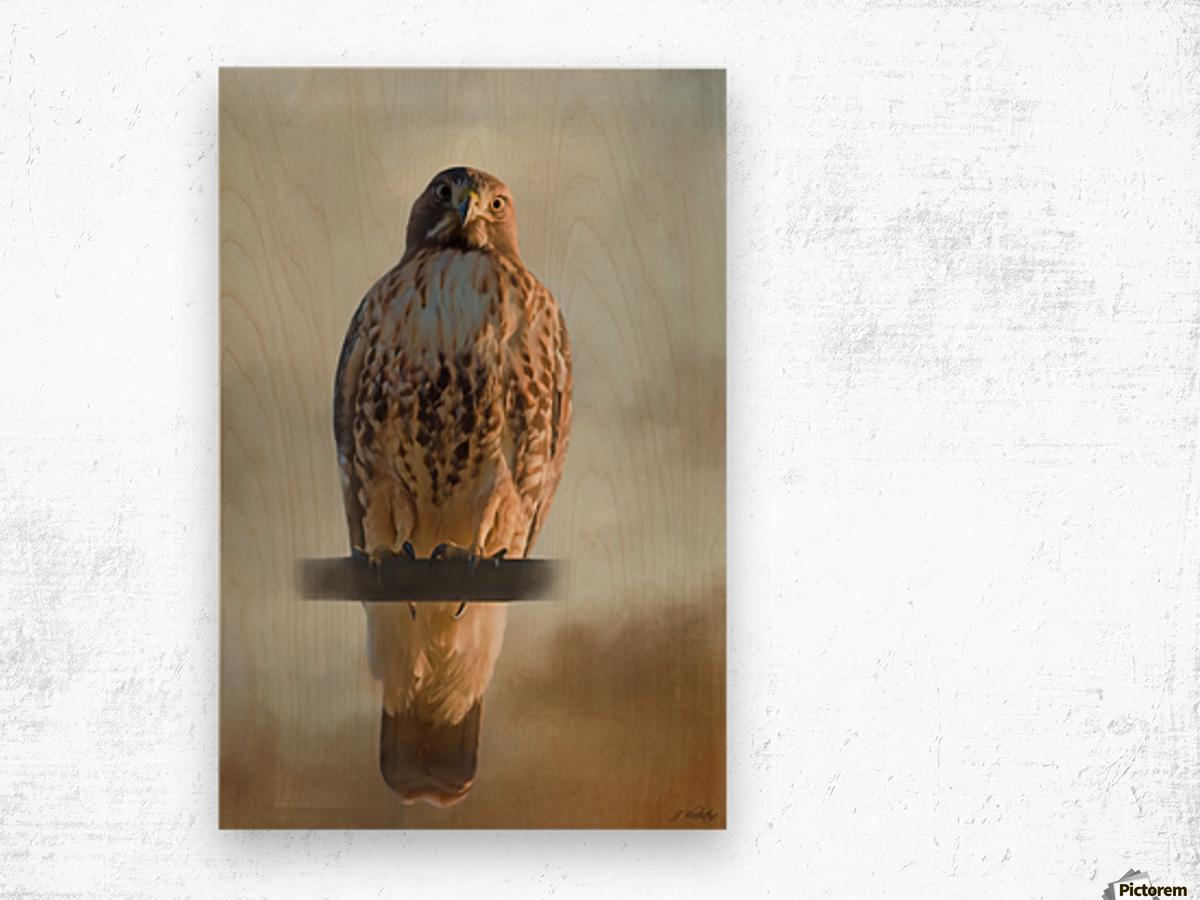 View Life - Hawk Art by Jordan Blackstone Wood print