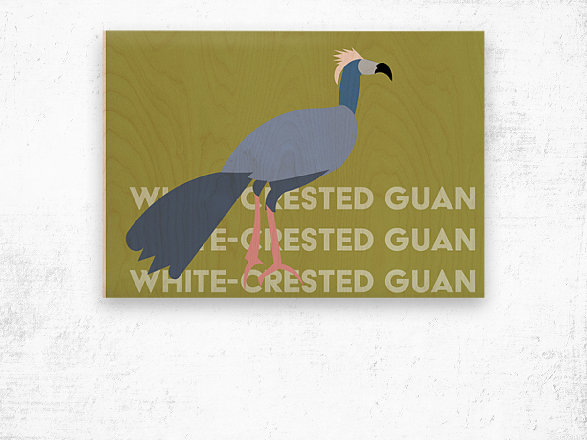 White-Crested Guan Wood print