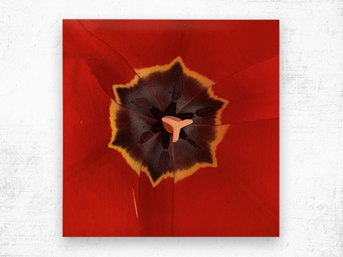Treasured Tulip Wood print