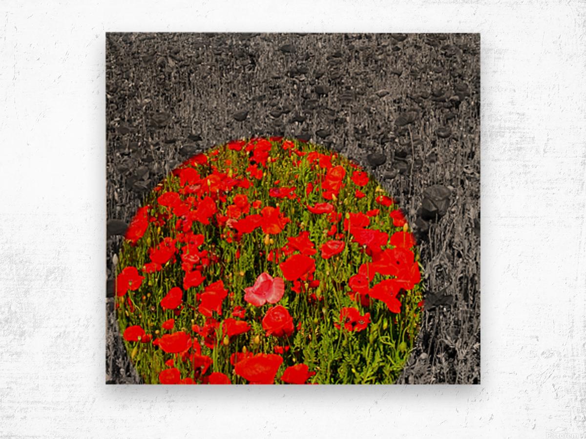 Poppy Popper Popping Wood print