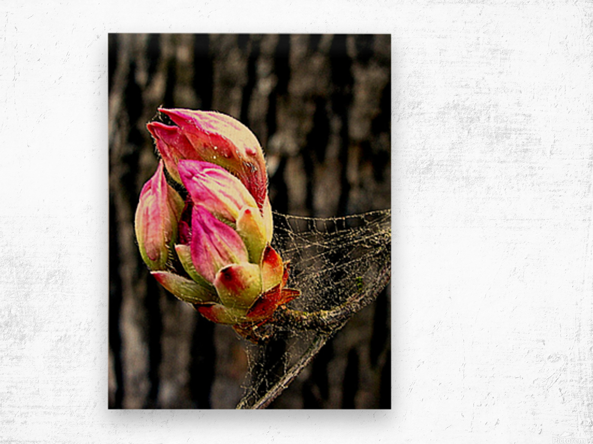 This Buds For You Wood print
