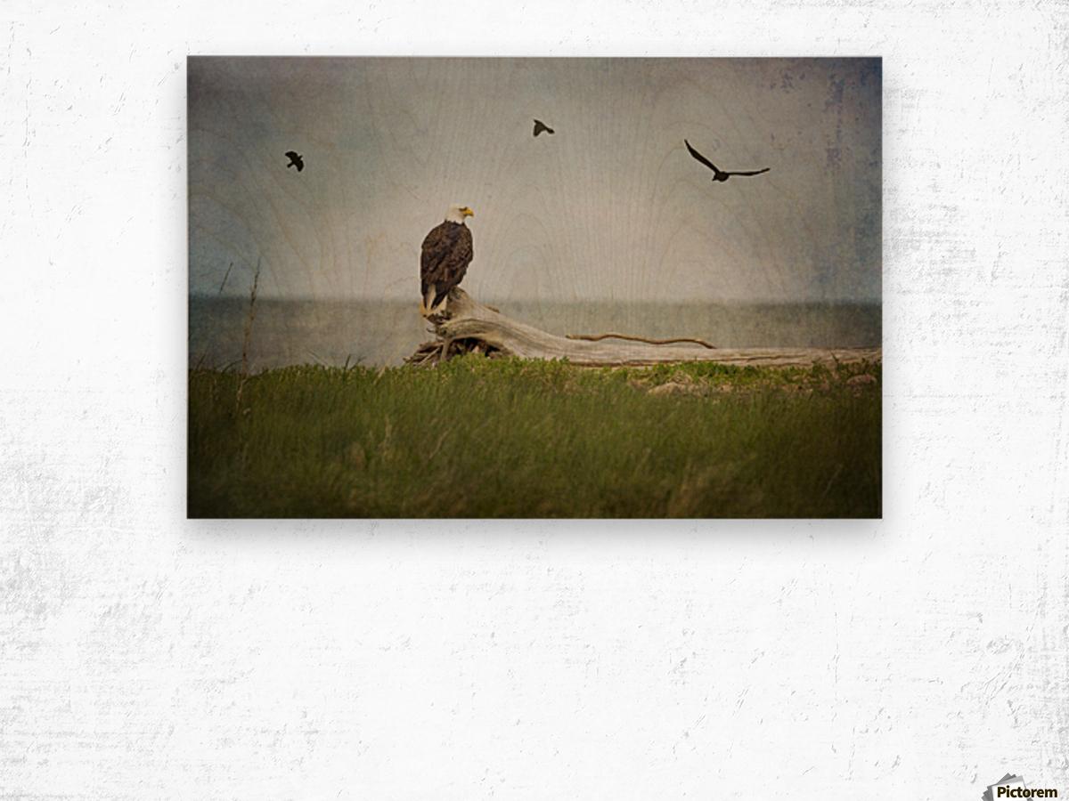 Bald Eagle on Tree Trunk Wood print