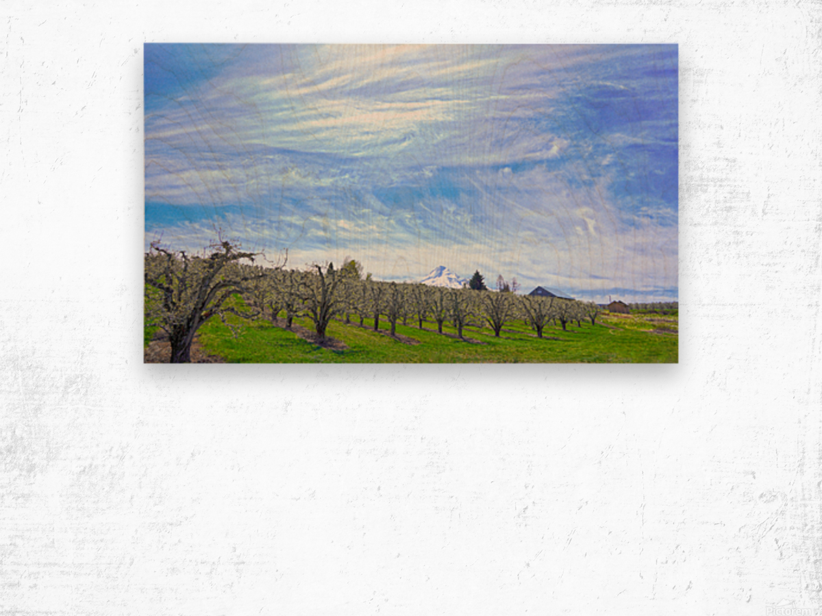 Spring in the Orchard Hood River Valley Oregon Wood print