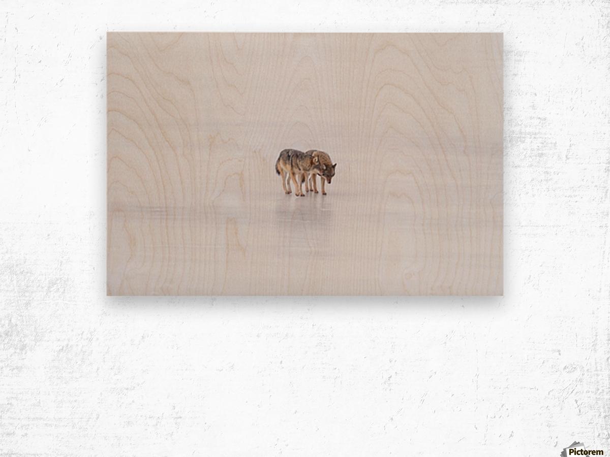 Two Coyote Wood print