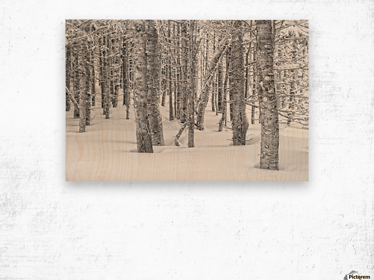 Pines at the Skyline Trail Wood print