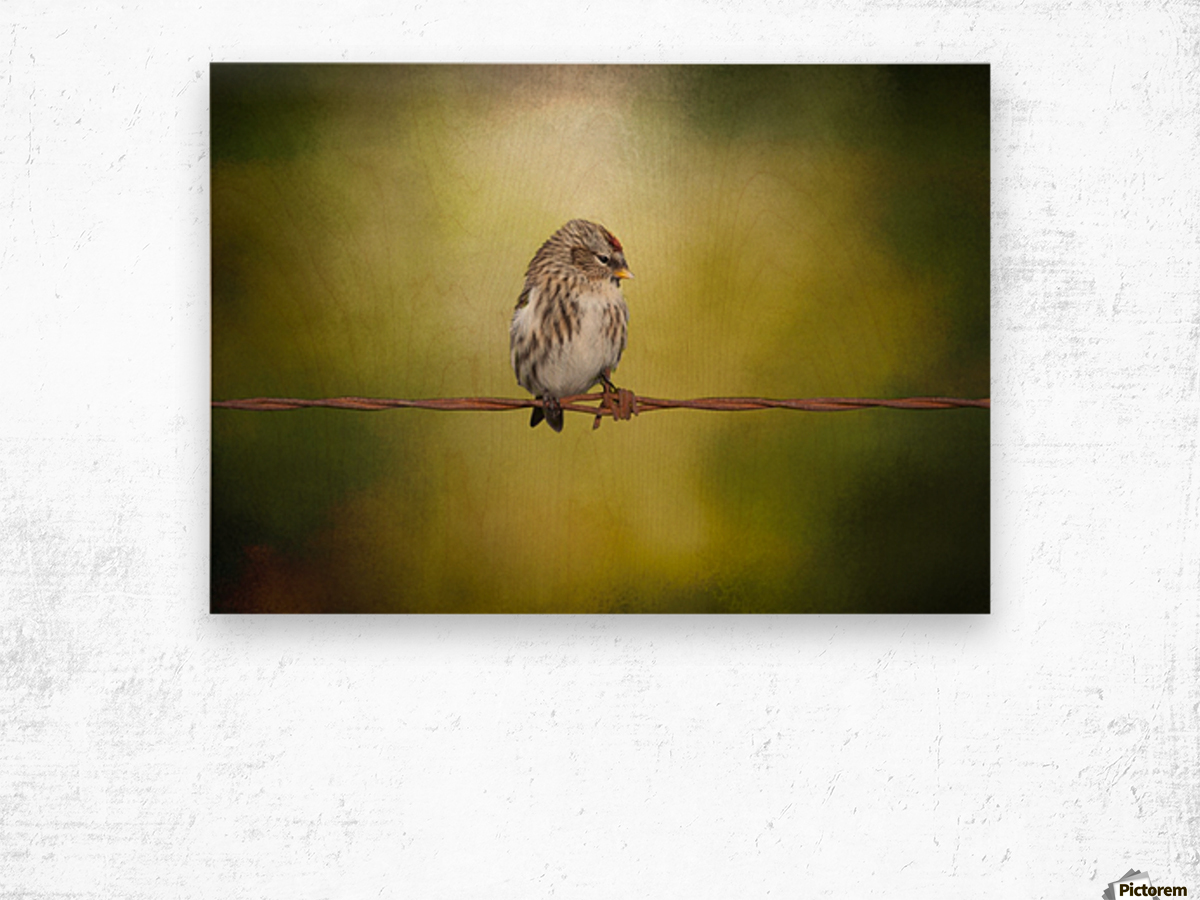 Redpoll on a Wire Wood print