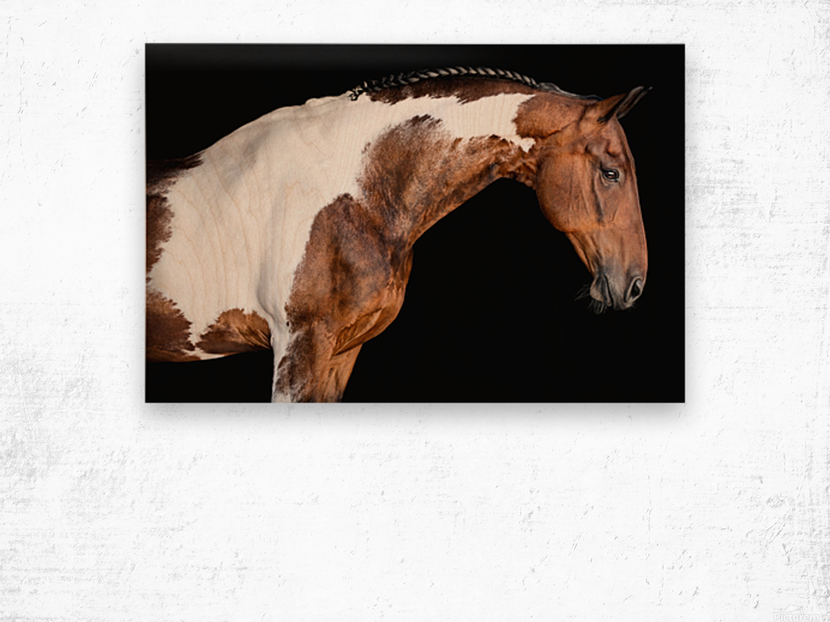 Paint Horse Portrait - Comanche Wood print