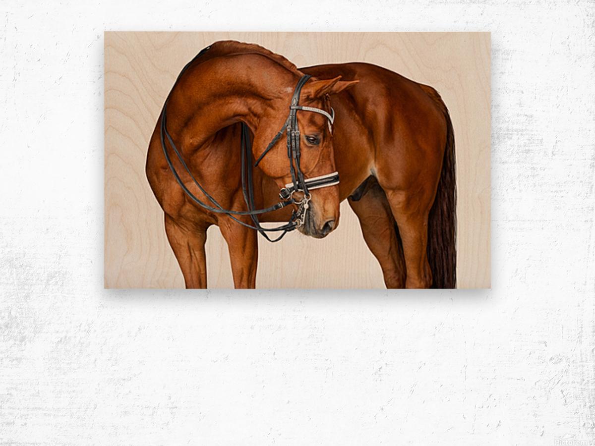 Chestnut Horse Portrait Wood print