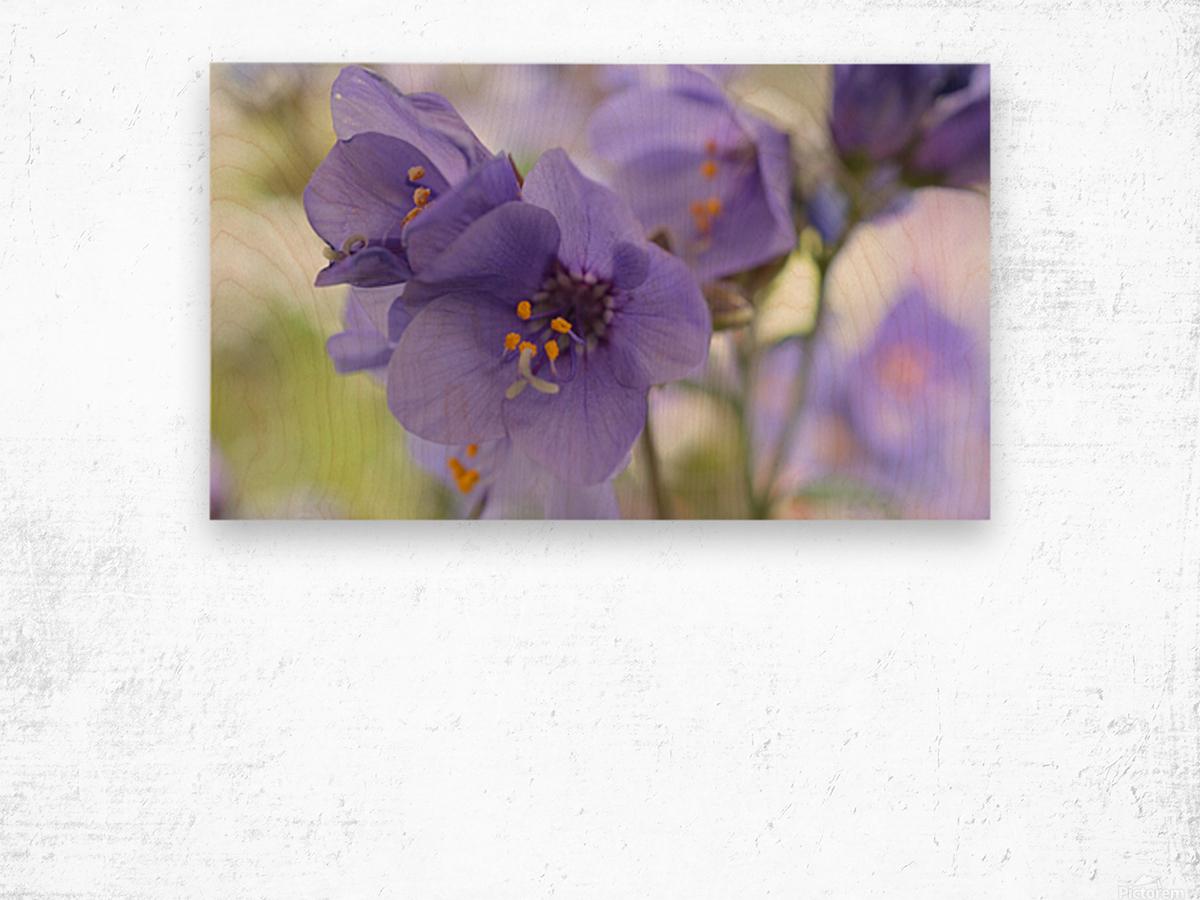 Blue Floral Photograph Wood print