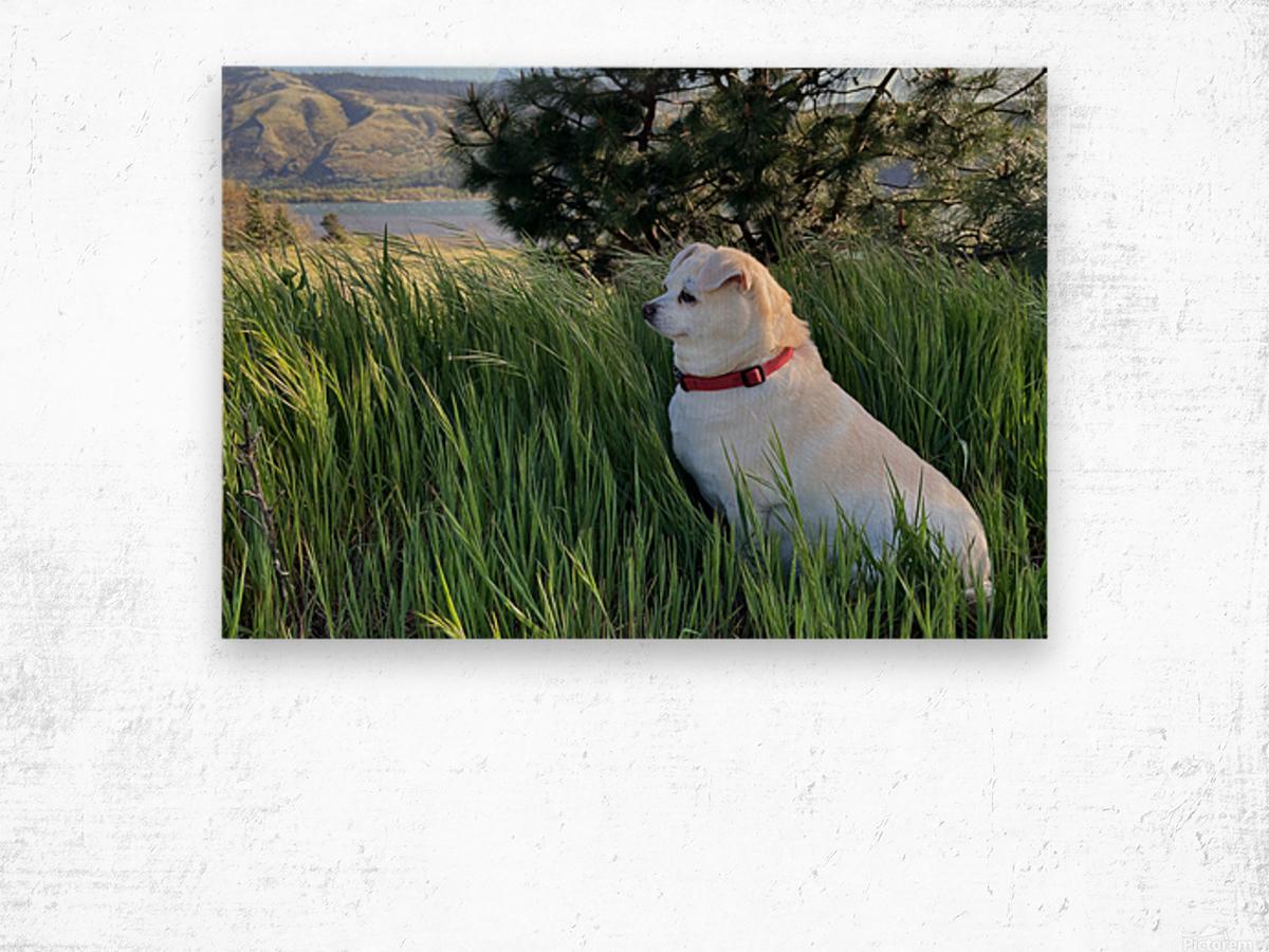 Blossom in Tall Grass Wood print