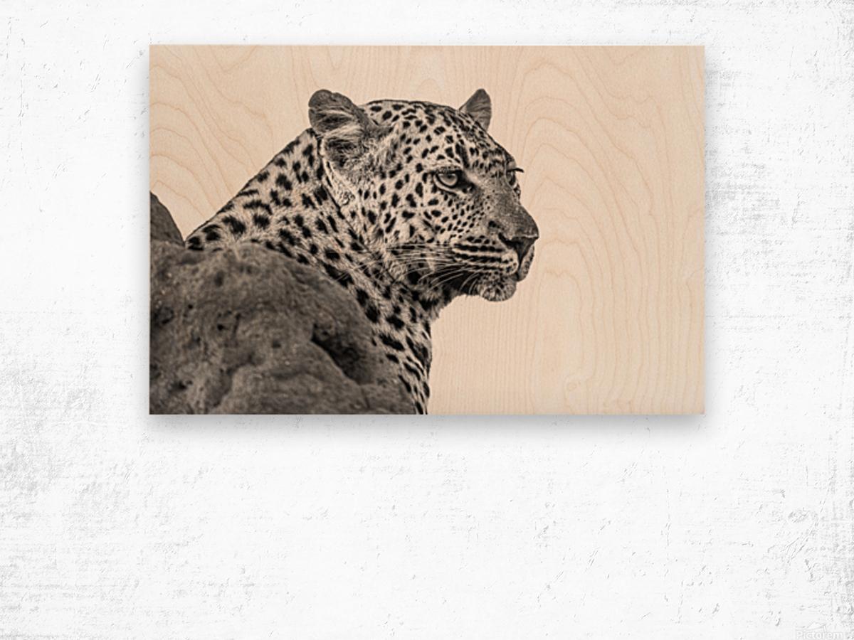 Leopard - B&W Wood print