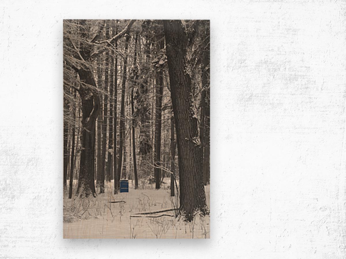 Blue Barrel in Woods Wood print