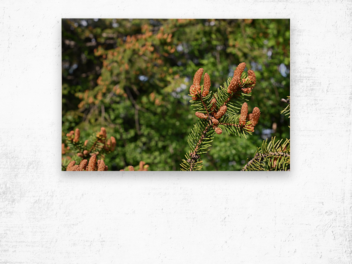 Spruce twig and background Wood print