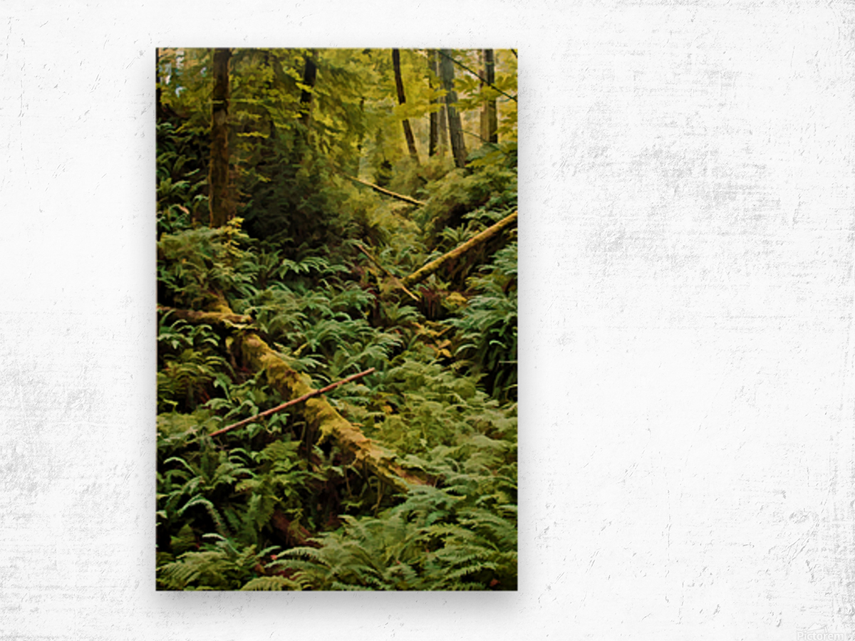 Fern Hollow Wood print