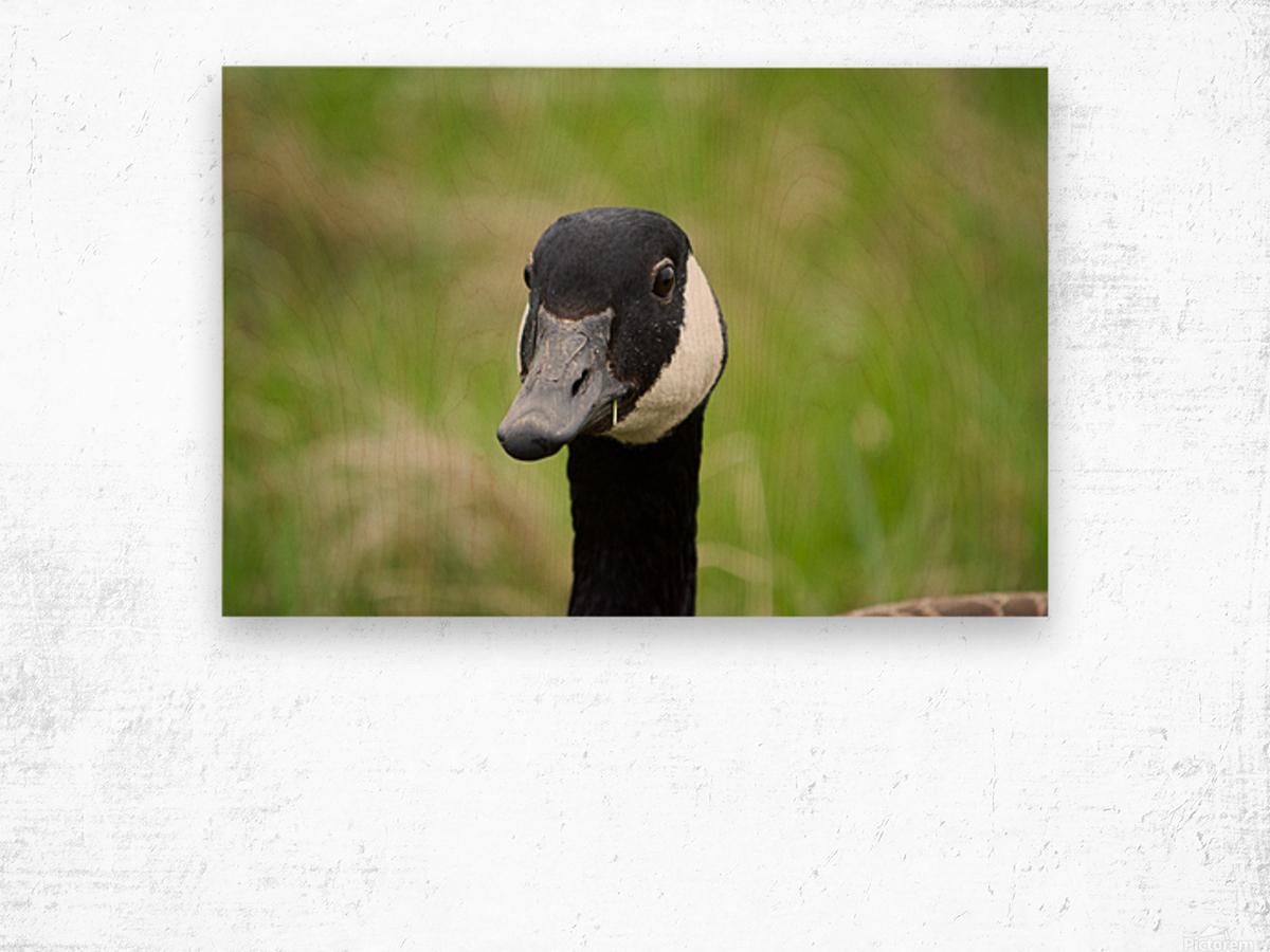 Toothpick Goose Wood print