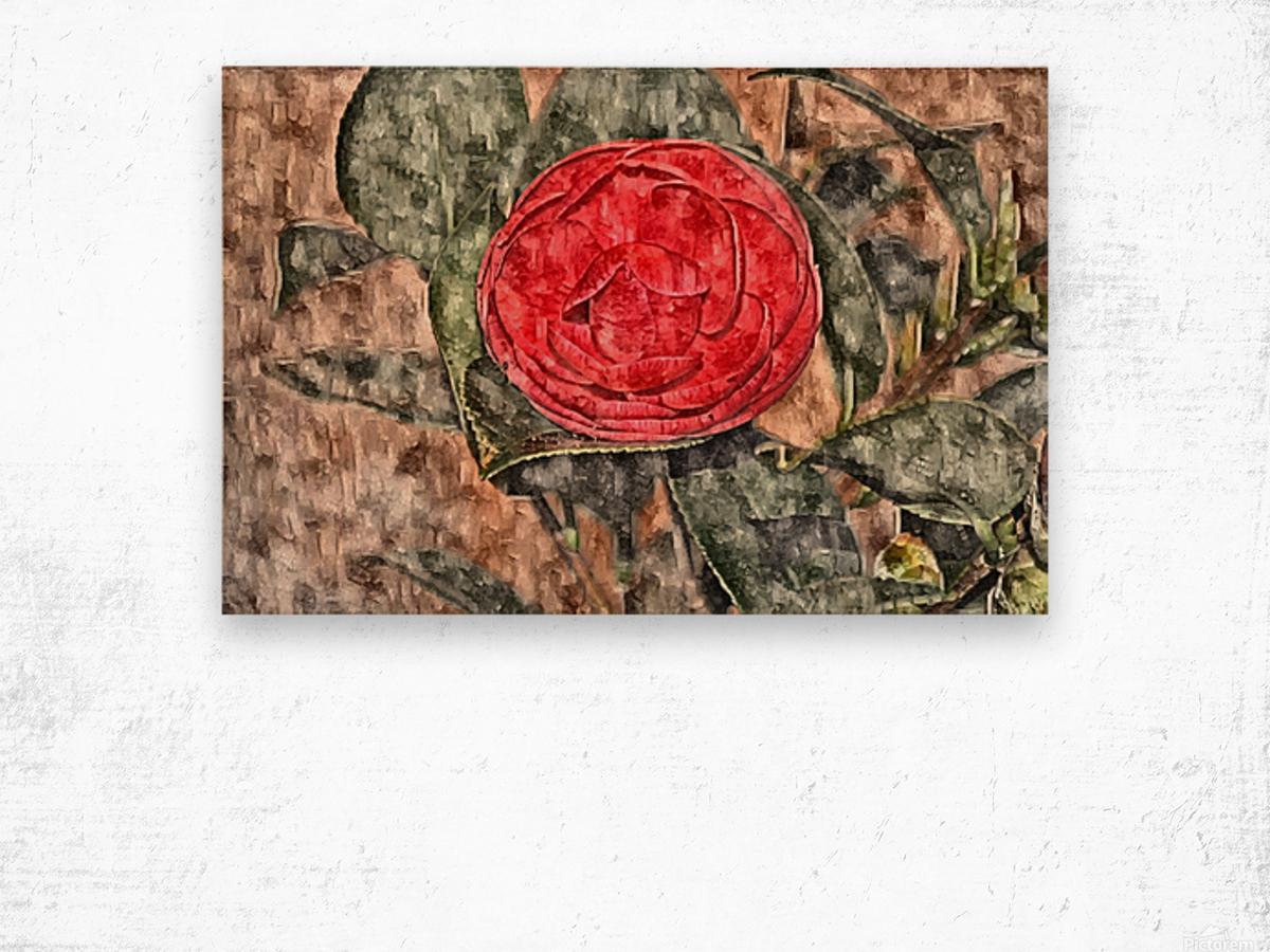 Camelia Blossom 11 Wood print