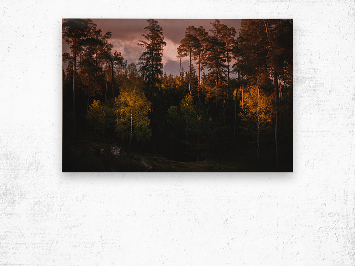 Morning forest Wood print