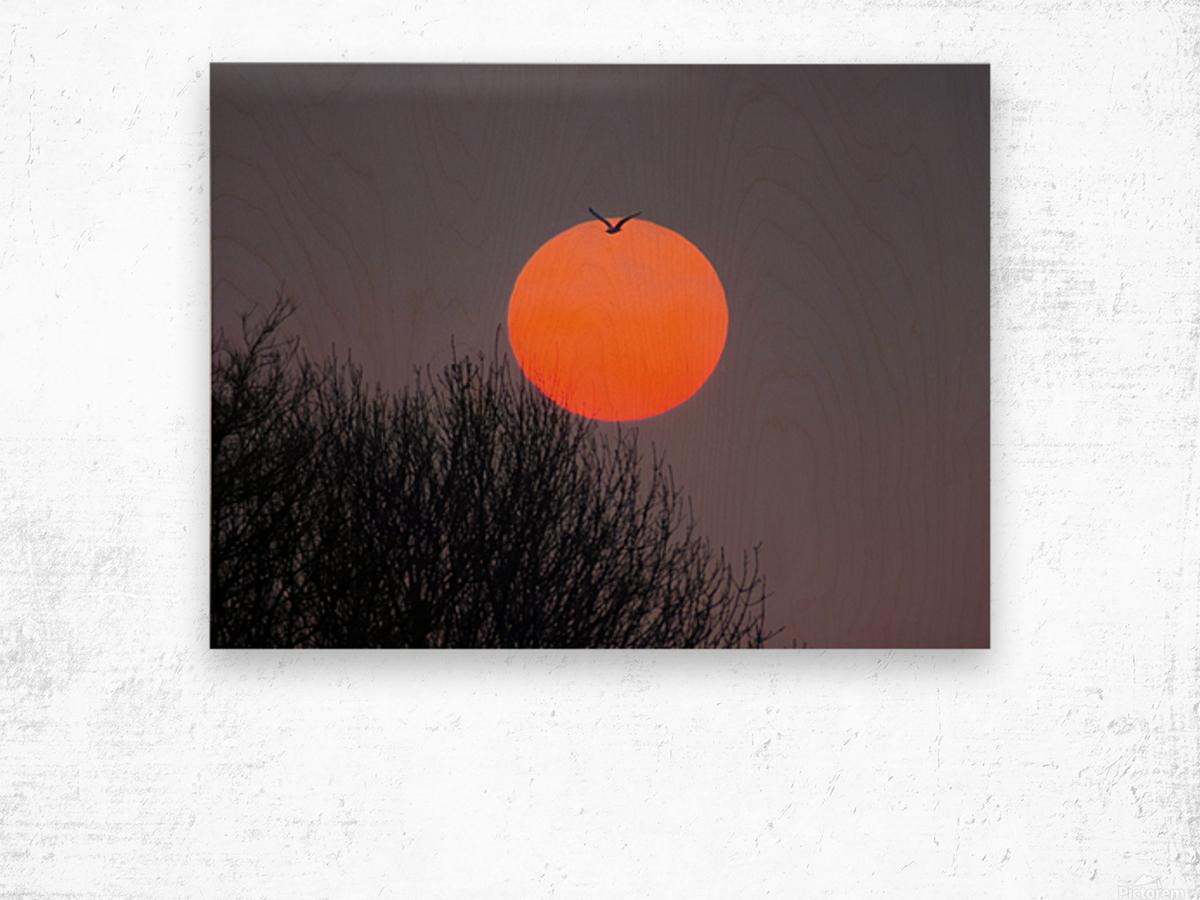 Sunrise lever de soleil Wood print