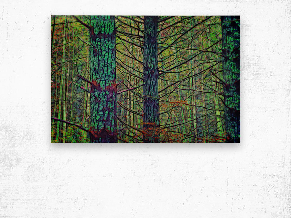 Forest Splendor Wood print