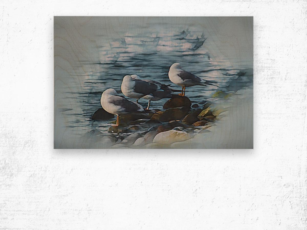 Preening Gulls Wood print