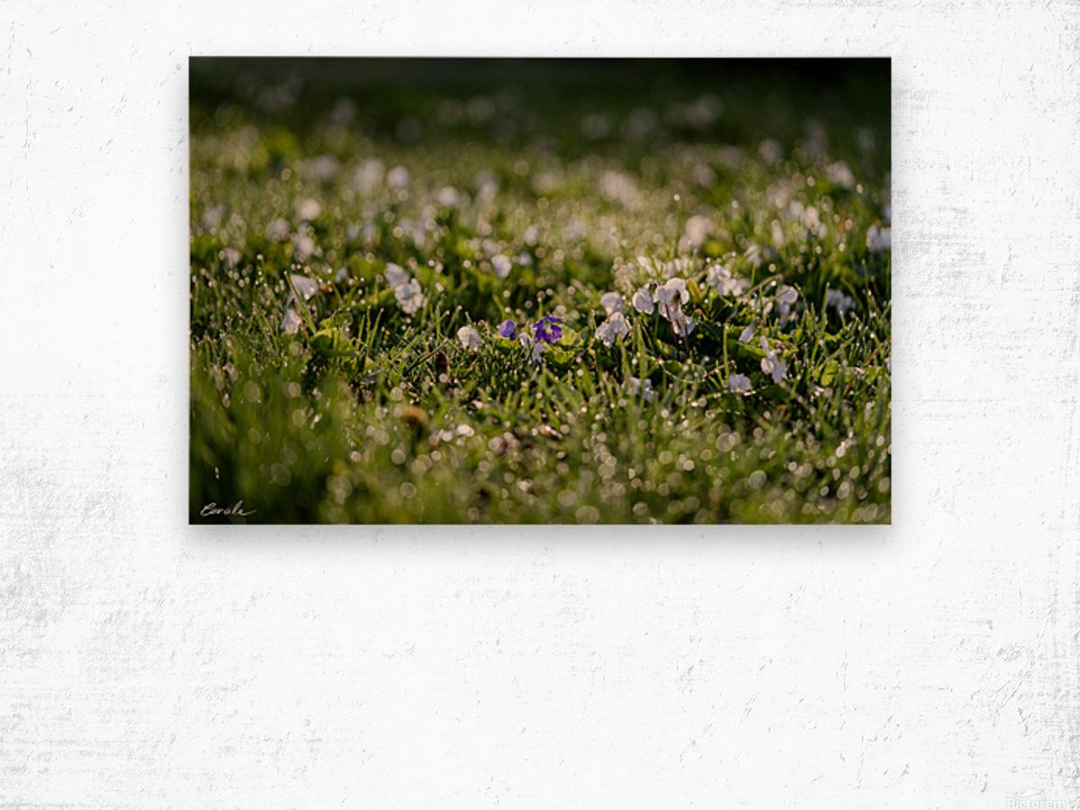 Confettis au jardin 2 Wood print