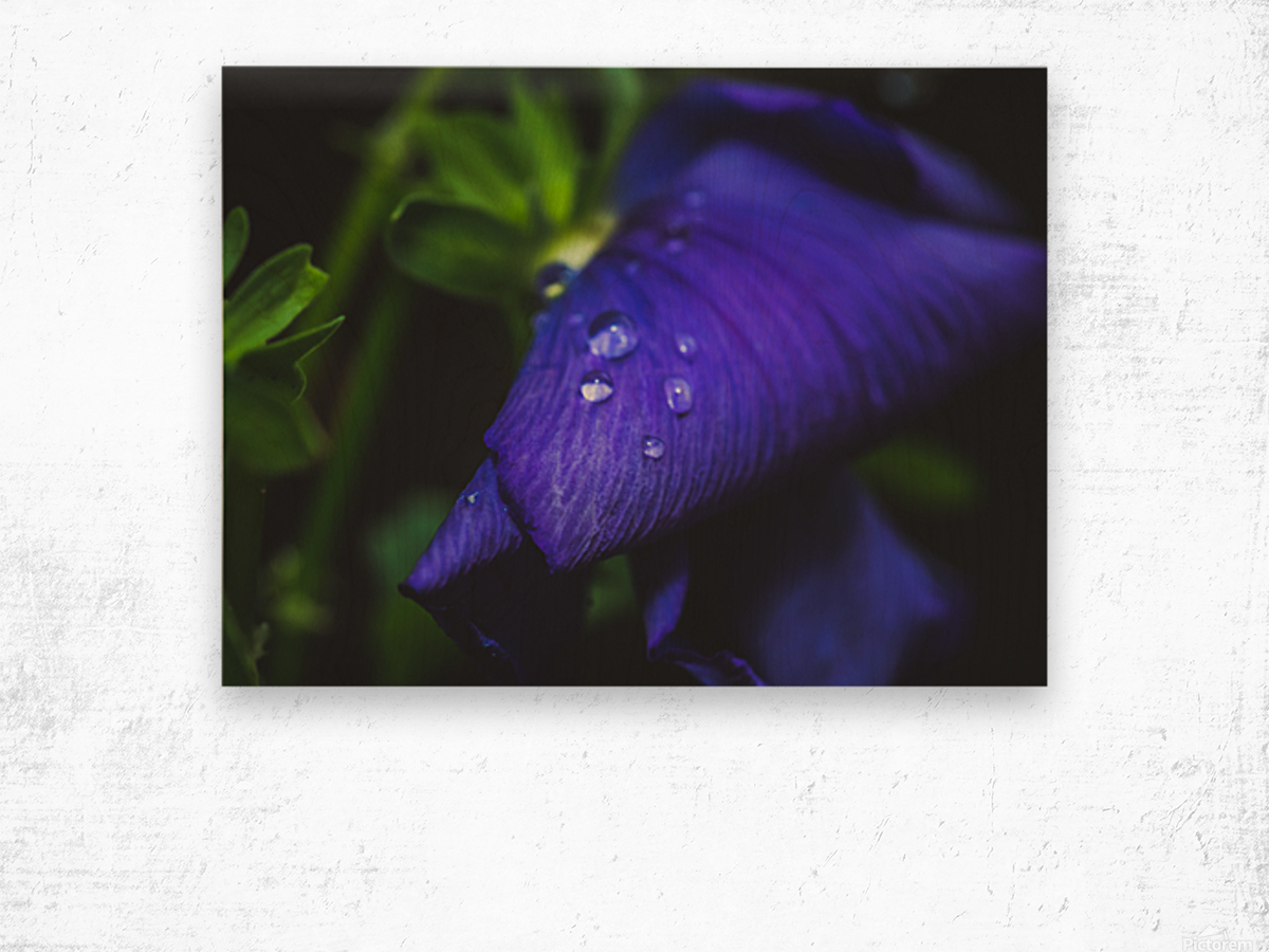 Drops With Blue Wood print