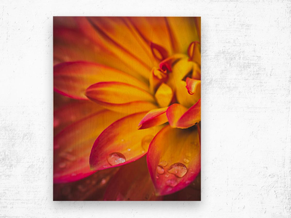 Rain On The Flowers Wood print