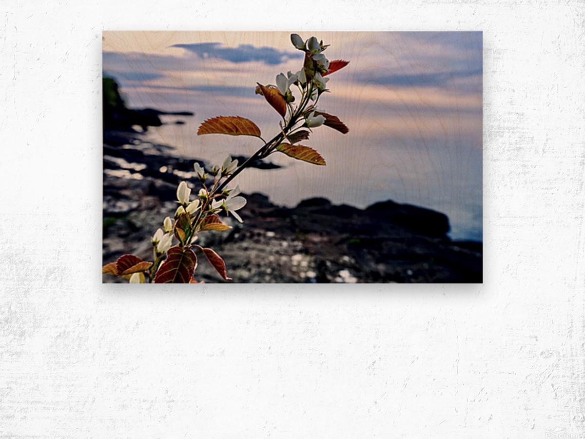 Flower on the Shoreline Wood print