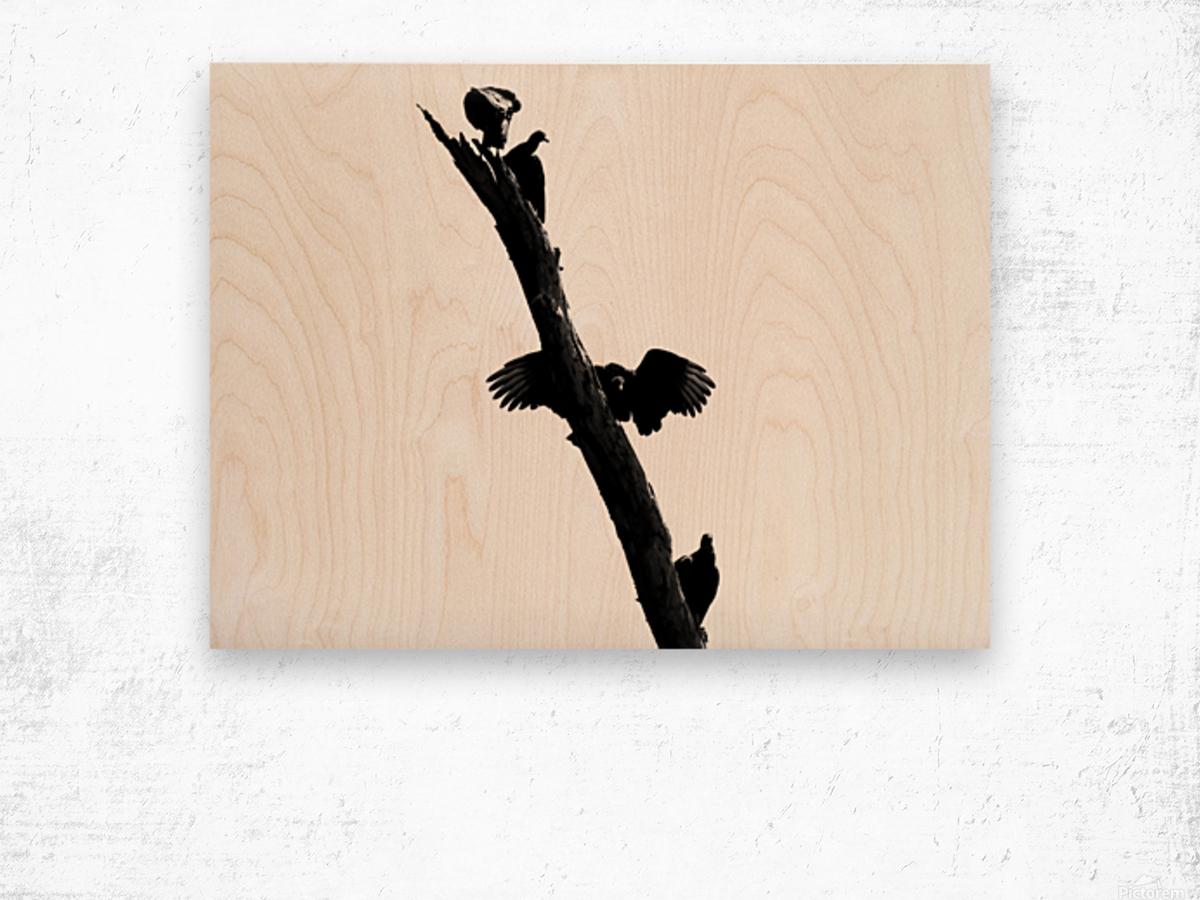 Vultures Wood print