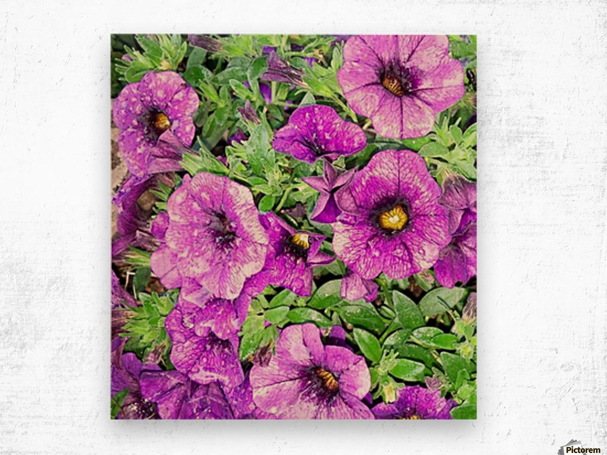 11165210_10104152102021742_768010163520633490_n Wood print