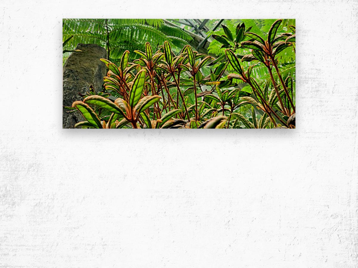 The Greenhouse Wood print