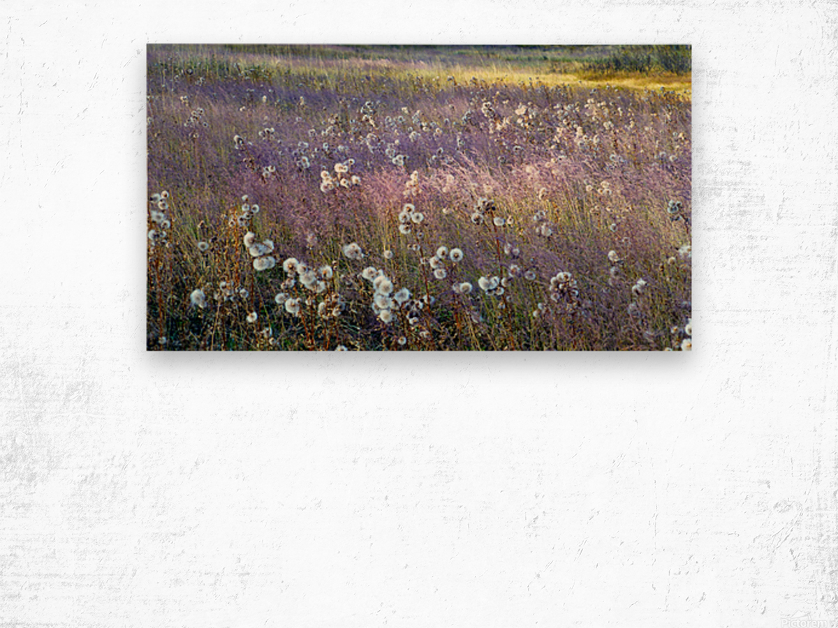 Dream Field Wood print