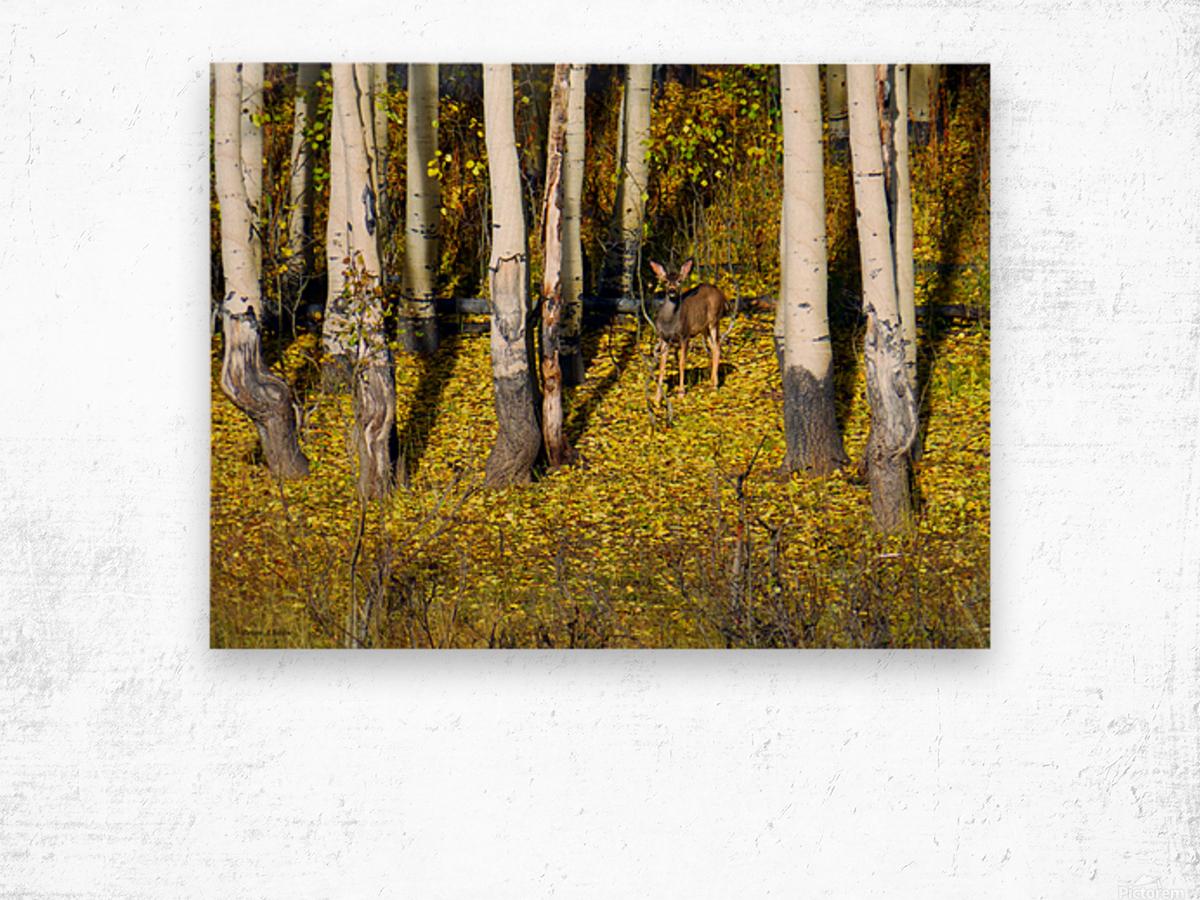 Baby Deer in Old Aspen Trees Wood print