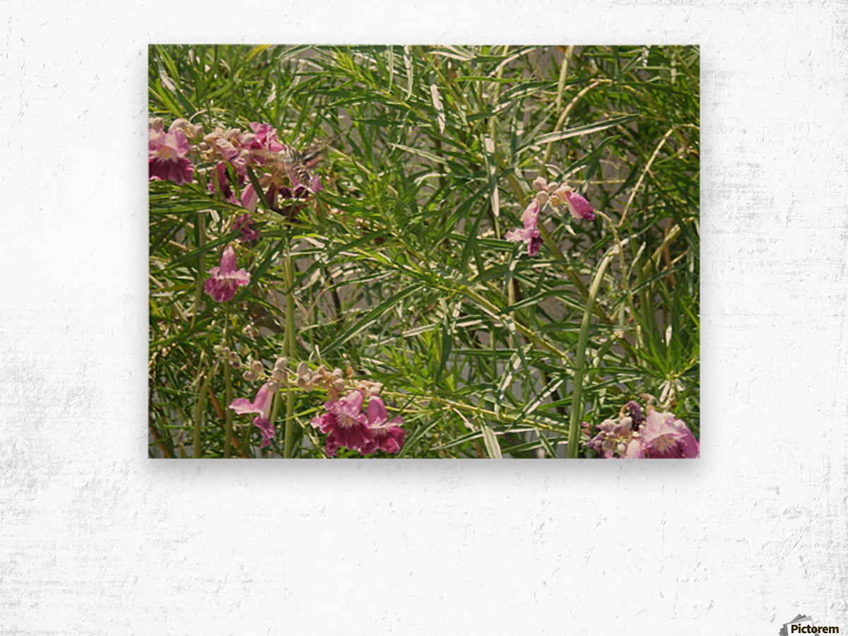 hummingbirdindesertwillow lrg Wood print