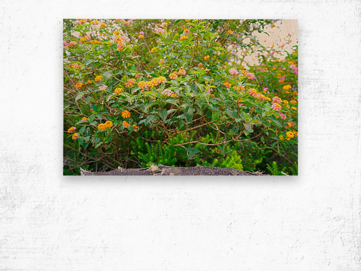 Wild Flowers Waimea Canyon Kauai Wood print