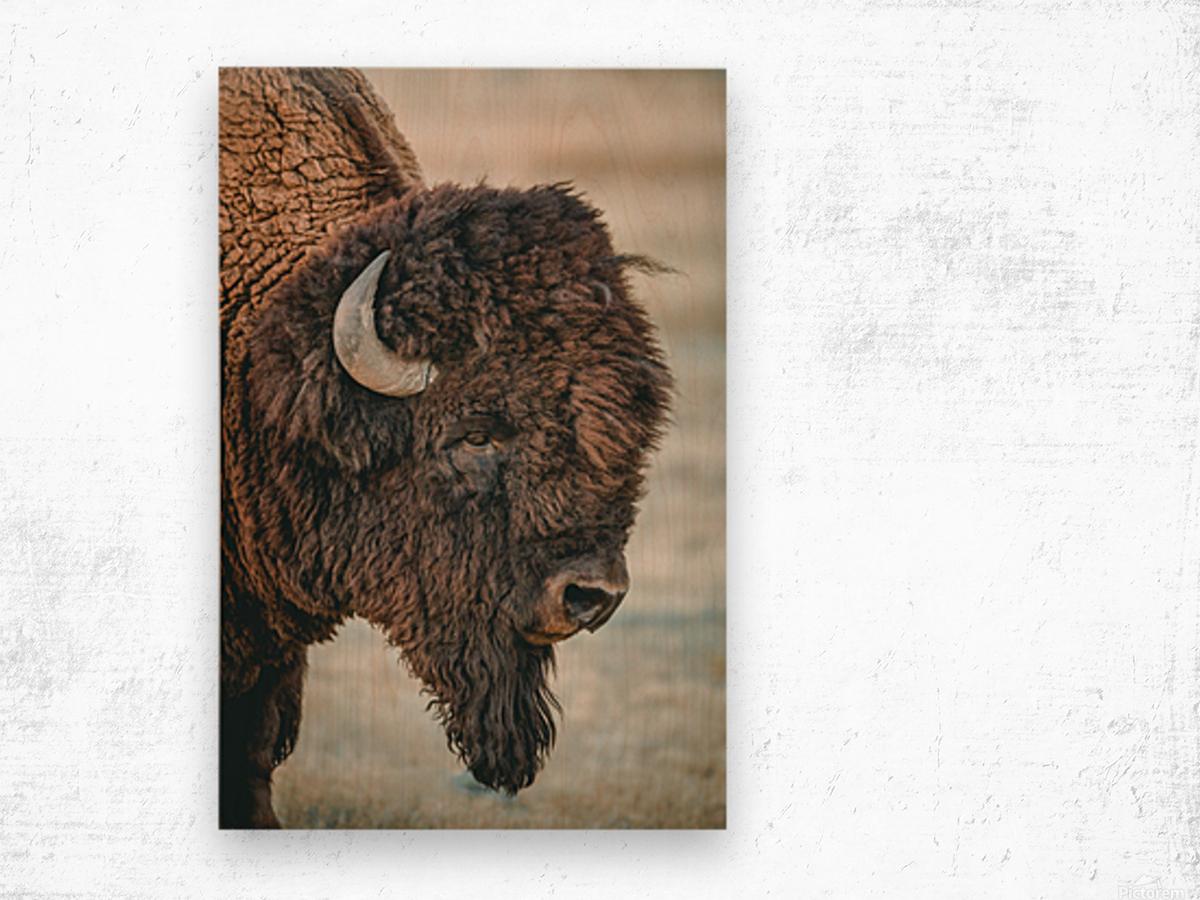 Cut the Bull Wood print