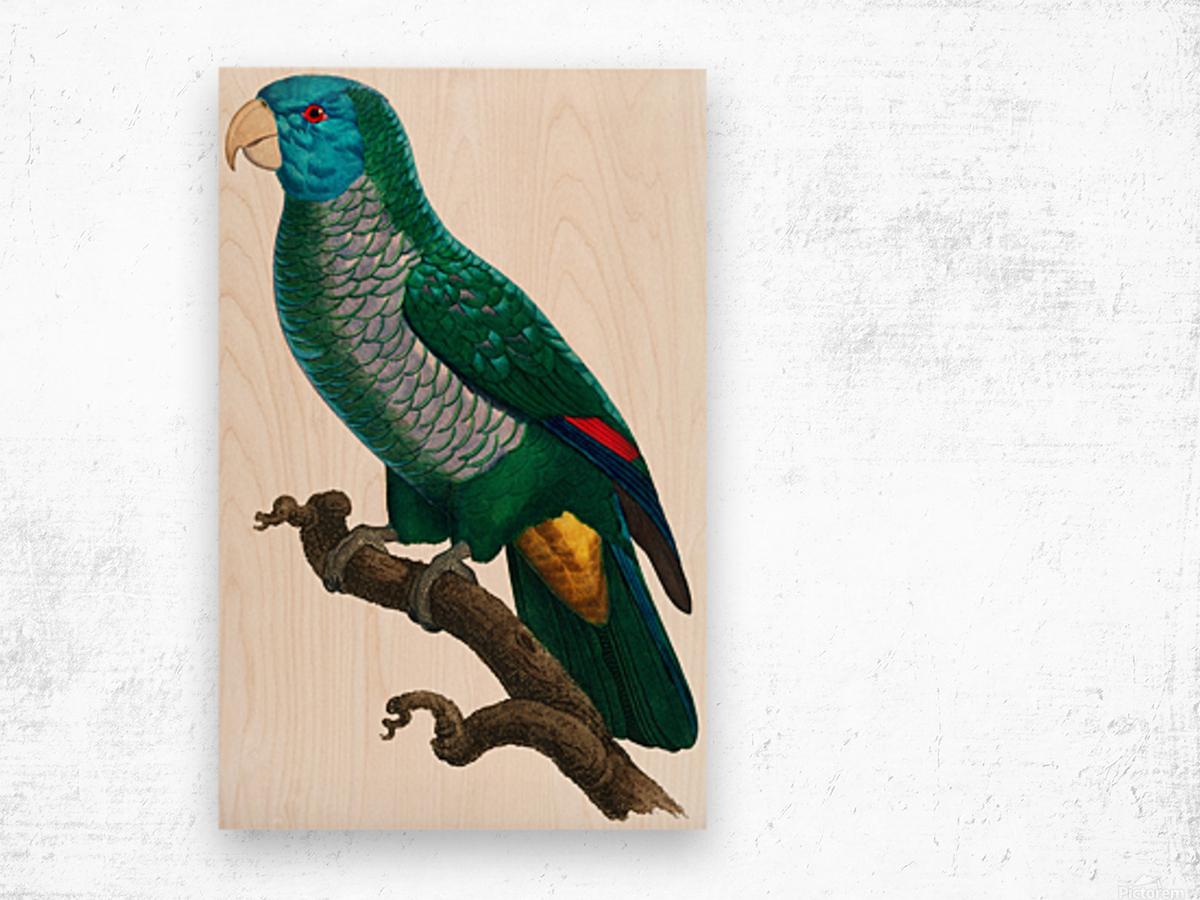 Yellow and Green Parrot Art Print Digital Download Vintage French Bird Illustration Printable Coastal Tropical Wall Art Wood print