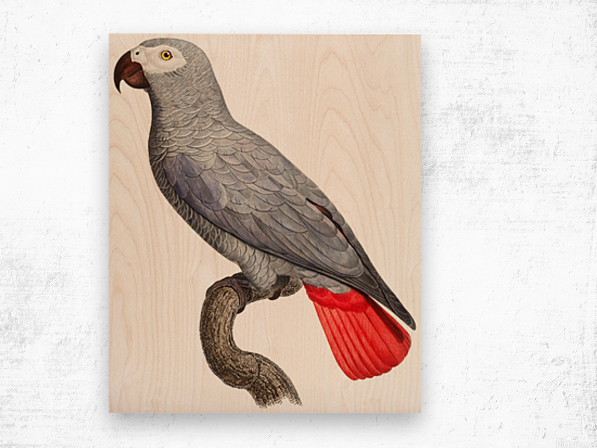 Parrot Print Art Poster with Parrot Parrot Wall Art for Bird Lovers Wood print