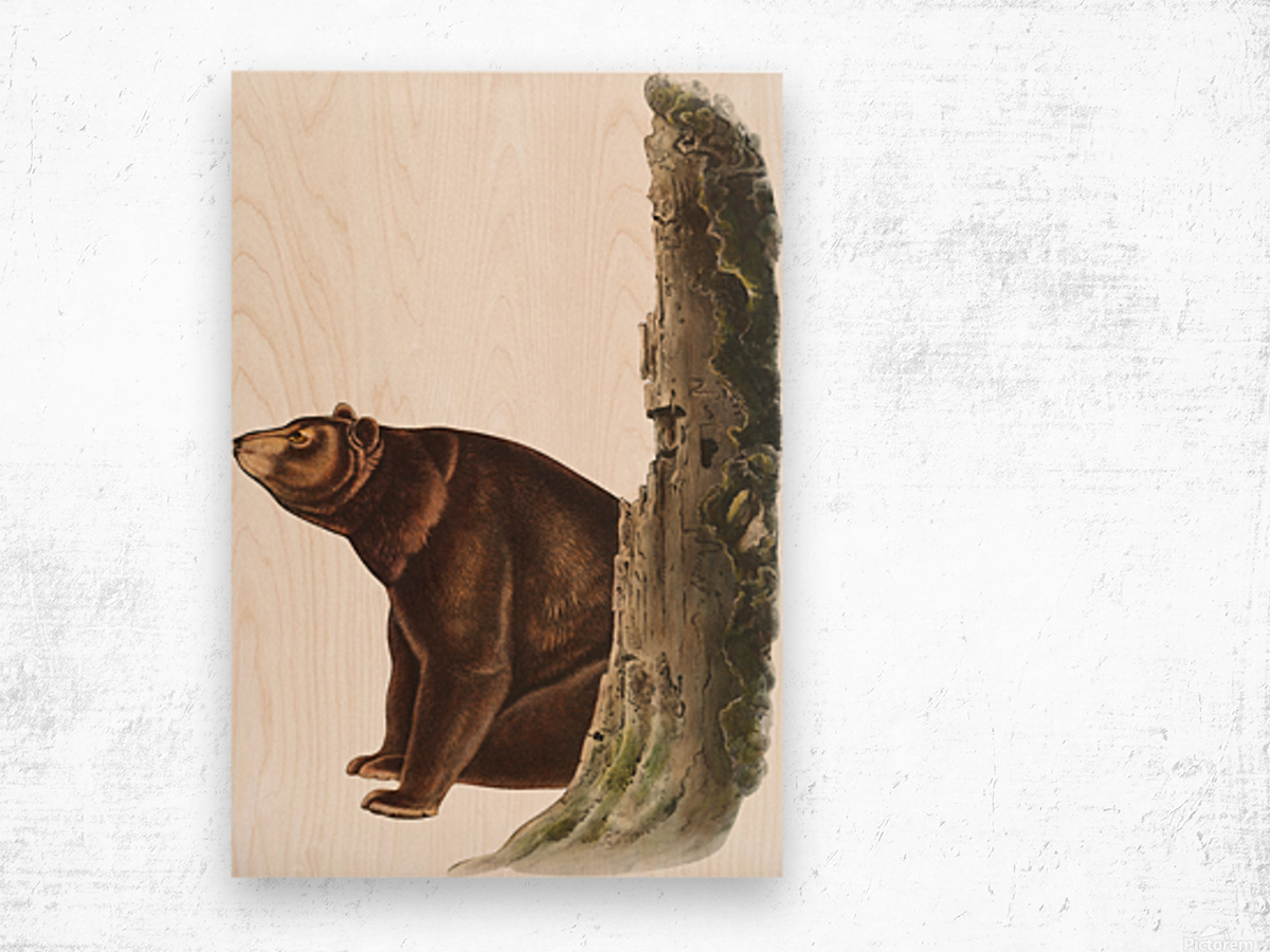 Bear Print Wood print