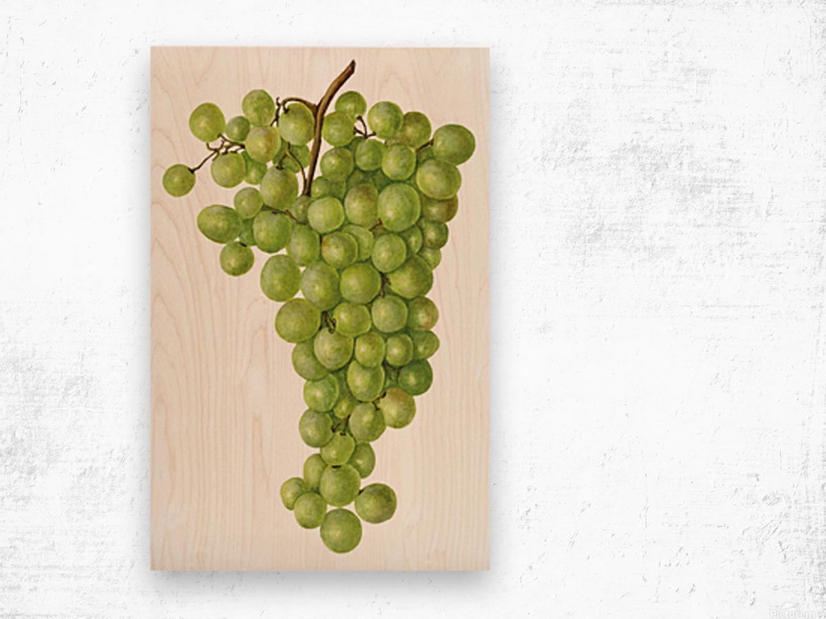 Green Grapes Wall Decor Vintage Botanical Poster Kitchen Art Wood print