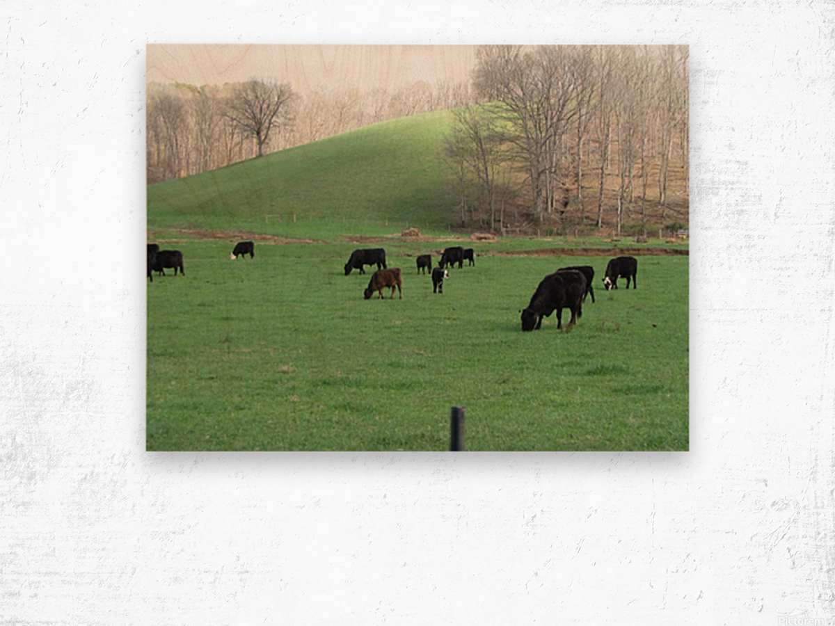 Cows Lullaby Impression sur bois